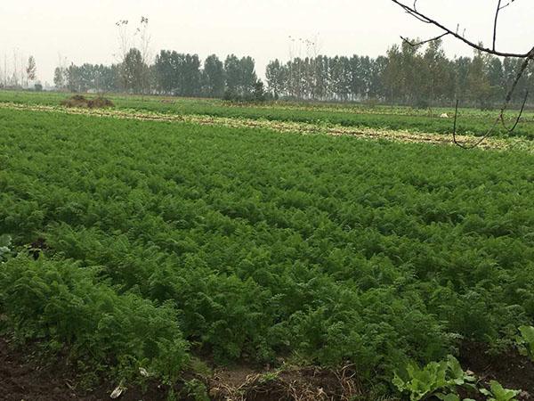 中膳蔬菜供应基地