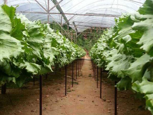中膳集团蔬菜基地